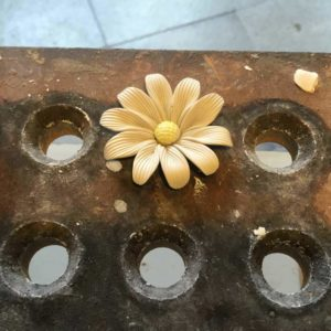 drying daisy flower
